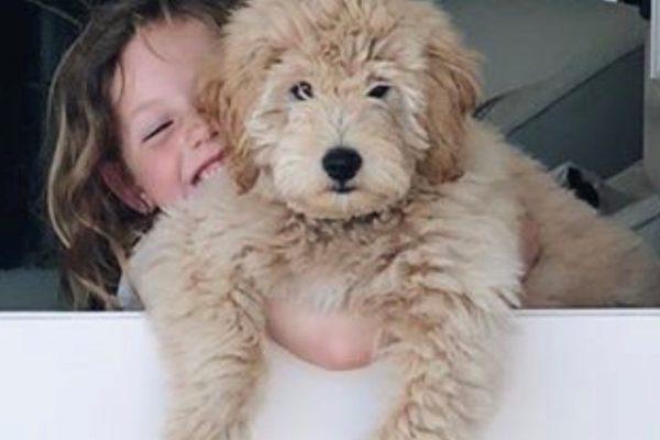 Luna pup at around 8 months