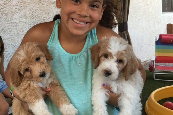 Website- Kids & Pups